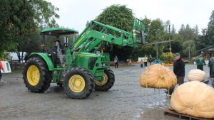 pumpkin-weigh-off-aldor-acres-family-farm